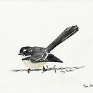 Grey Fantail by FayeDoherty