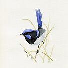 Superb Blue Wren by FayeDoherty