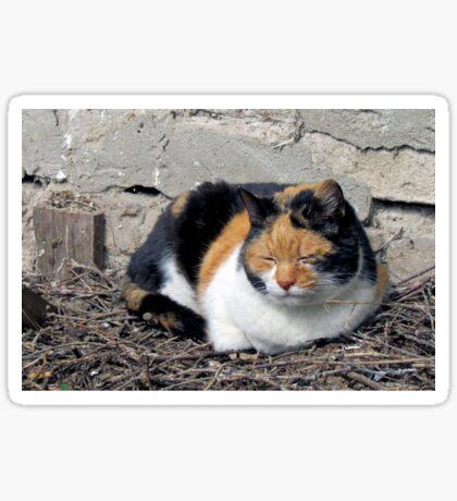 Stray Cat Sticker