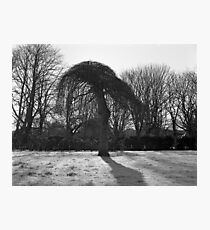 Tree In A Freeze Photographic Print