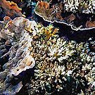Iluminated Coral by Dorothy Berry-Lound