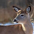 Deer fawn in Autumn by Jim Cumming