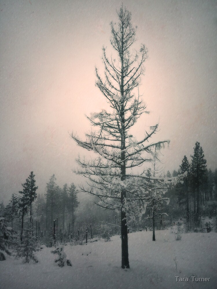 Snow and the Remnants of the Fire by Tara  Turner