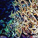 Fish and Coral Cluster 5 by Dorothy Berry-Lound