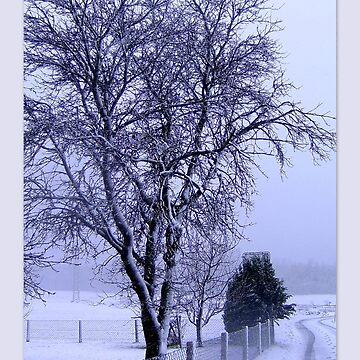 On a snowy path... by angel1