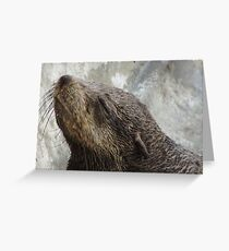 Seal at the Waterfront in Capetown * Greeting Card