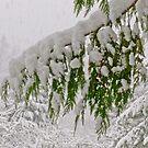 SNOWFALL  by Elaine Bawden