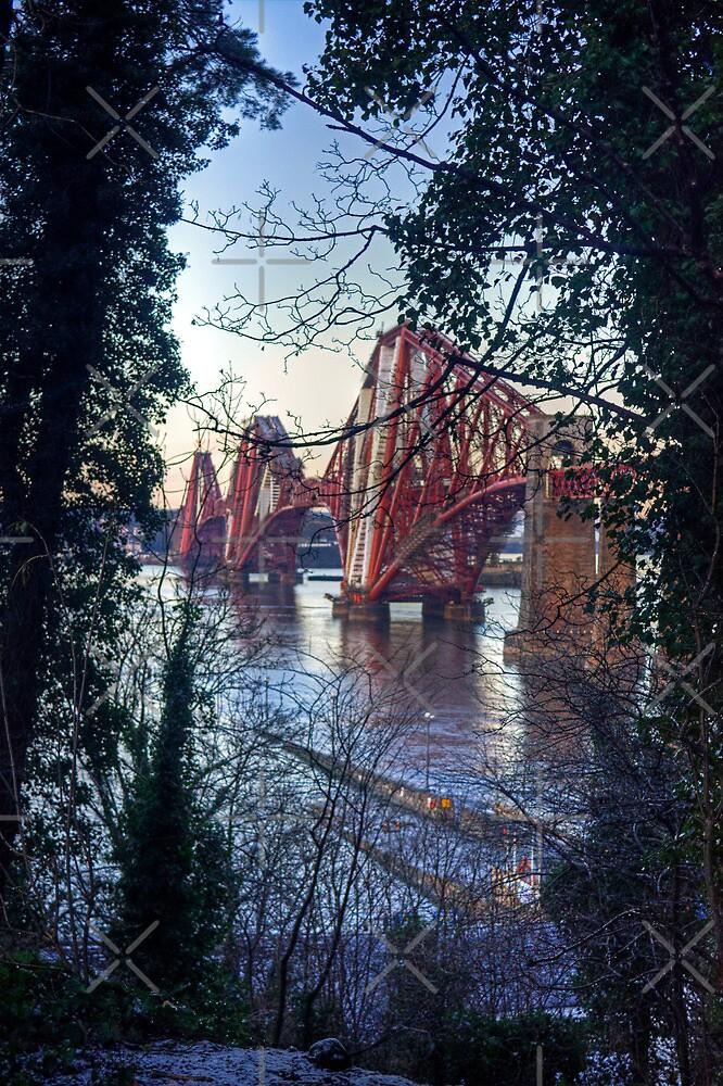 Rail Bridge through the trees by Tom Gomez