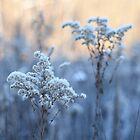 Winter Reed in blassen Farben von denis-romanov