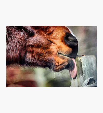 Fence Post Takes a Licking Photographic Print