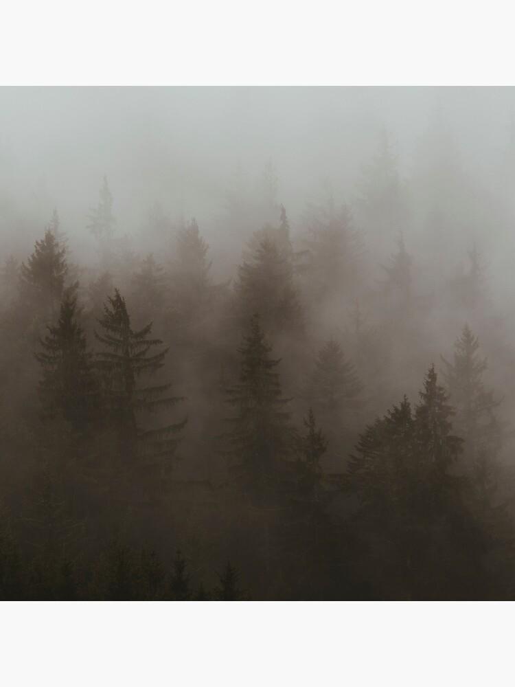 «Forêt Brumeuse» par patricemestari