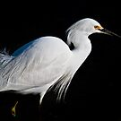 White Bird by socalgirl