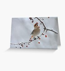 Bohemian In Vermont Greeting Card