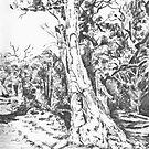 Mernmerna, Flinders Ranges by Barnaby Edwards