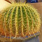 Barrel Cactus by Edward Fielding