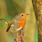 Robin Red Breast Photo Design by MGMasonCreative