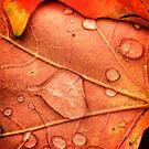 Fall Leaves by Robert Baker