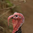 Portrait of a Turkey. by Billlee