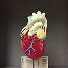 Heart by Robert Baker