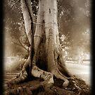 The Tree by Carlos Casamayor