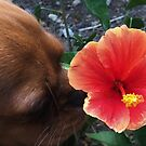 Tropical Hibiscus Flower Puppy by Cara Schingeck 2018 by Cara Schingeck