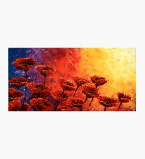 Heavenly Poppies Photographic Print