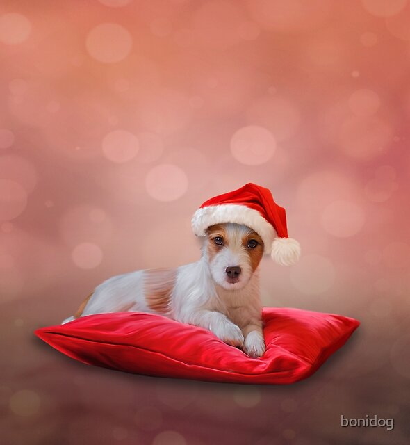 Jack Russell Terrier in red hat of Santa Claus by bonidog