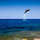 Dance of the Dolphin by PhotoWorks