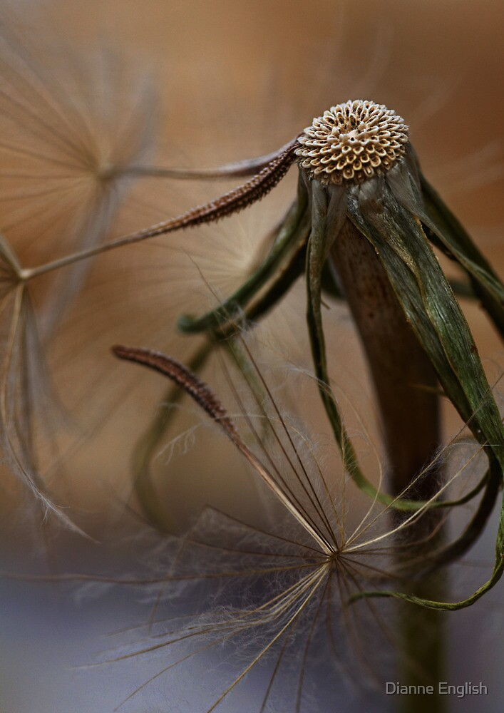 Dandelion Decline by Dianne English