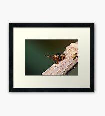 Crazy Eyed Fly Framed Print