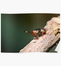 Crazy Eyed Fly Poster