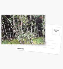 Forest near Loch Ness Postcards