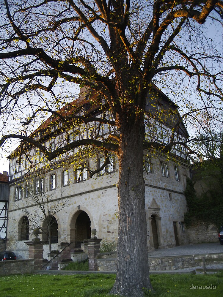 tree at the old town hall  by derausdo