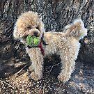Raffie's favourite ball! by Roz McQuillan