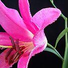 Pink Topaz. by Vitta