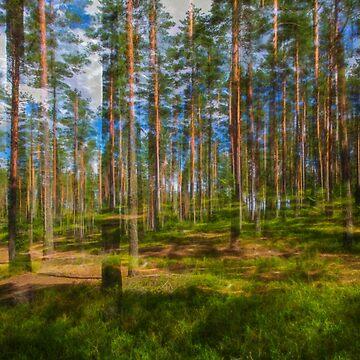 Pine land by wekegene