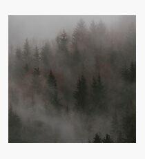 Mystic Wood Impression photo