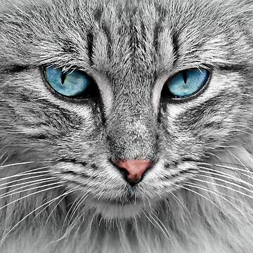 Cat with blue eyes by fourretout