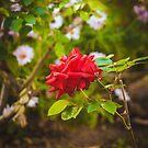 198 - That garden by CarlaSophia