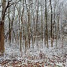 Winter Abstract by Lanis Rossi