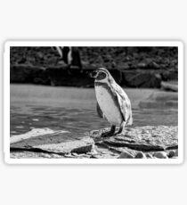 Penguin in Black & White Sticker