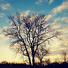 Sunrise by znamenski