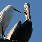 puerto vallarta - wildlife II by Bernhard Matejka