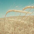 The wind tasted like fairy floss by Hayleyschreiber