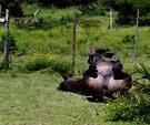 Horse rolling by Brian Edworthy