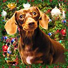 Christmas Doxie by BShirey