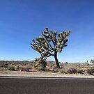 Joshua Tree by Paula Bielnicka