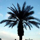 Palm Tree by Paula Bielnicka