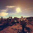 Cholla Cactus by Paula Bielnicka