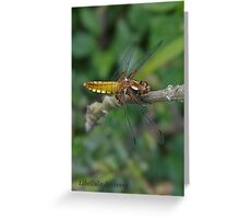 Broad-bodied Chaser dragonfly Greeting Card